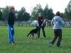 Belohnungsphase für einen der vorgeführten Hunde