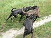 Mutter und Schwester mischen Arthos nach Boxerlust auf.